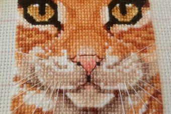 Cats Eyes Finished